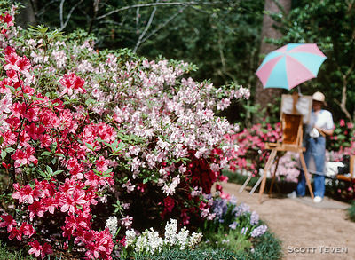 Springtime Azalea Trail and Azaleas blooming