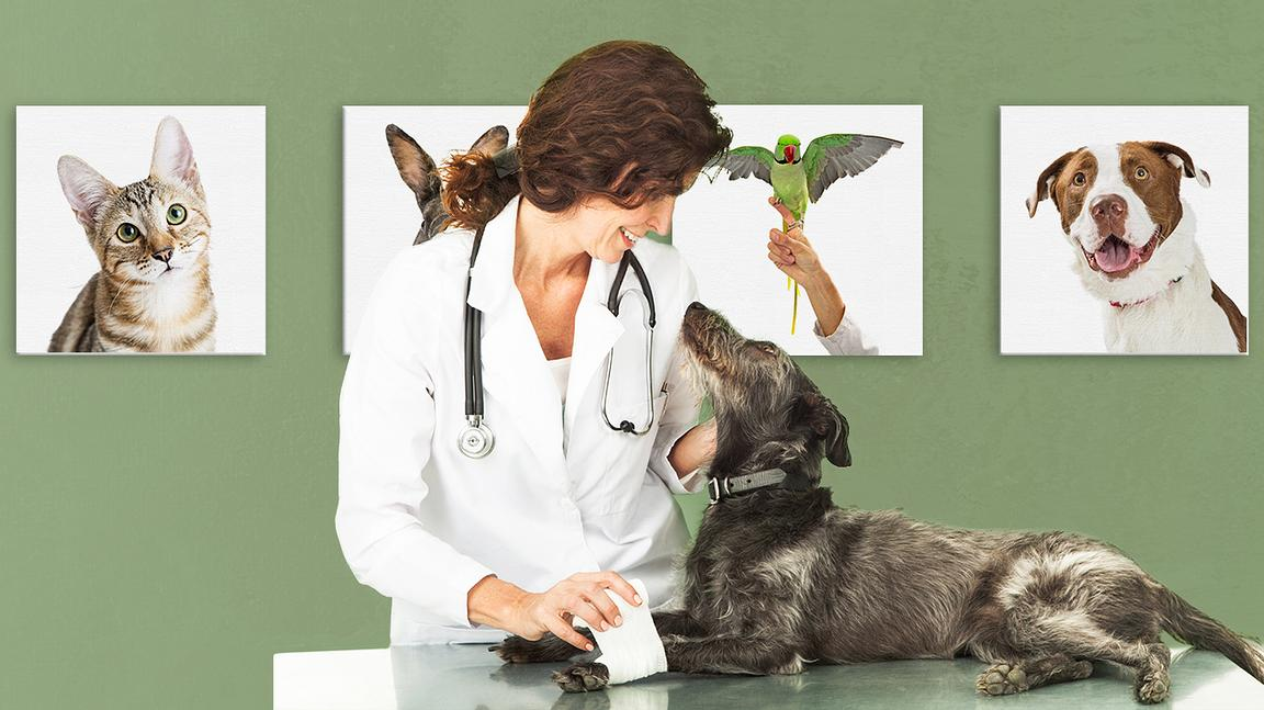 Veterinary_Office_With_Fun_Wall_Decor