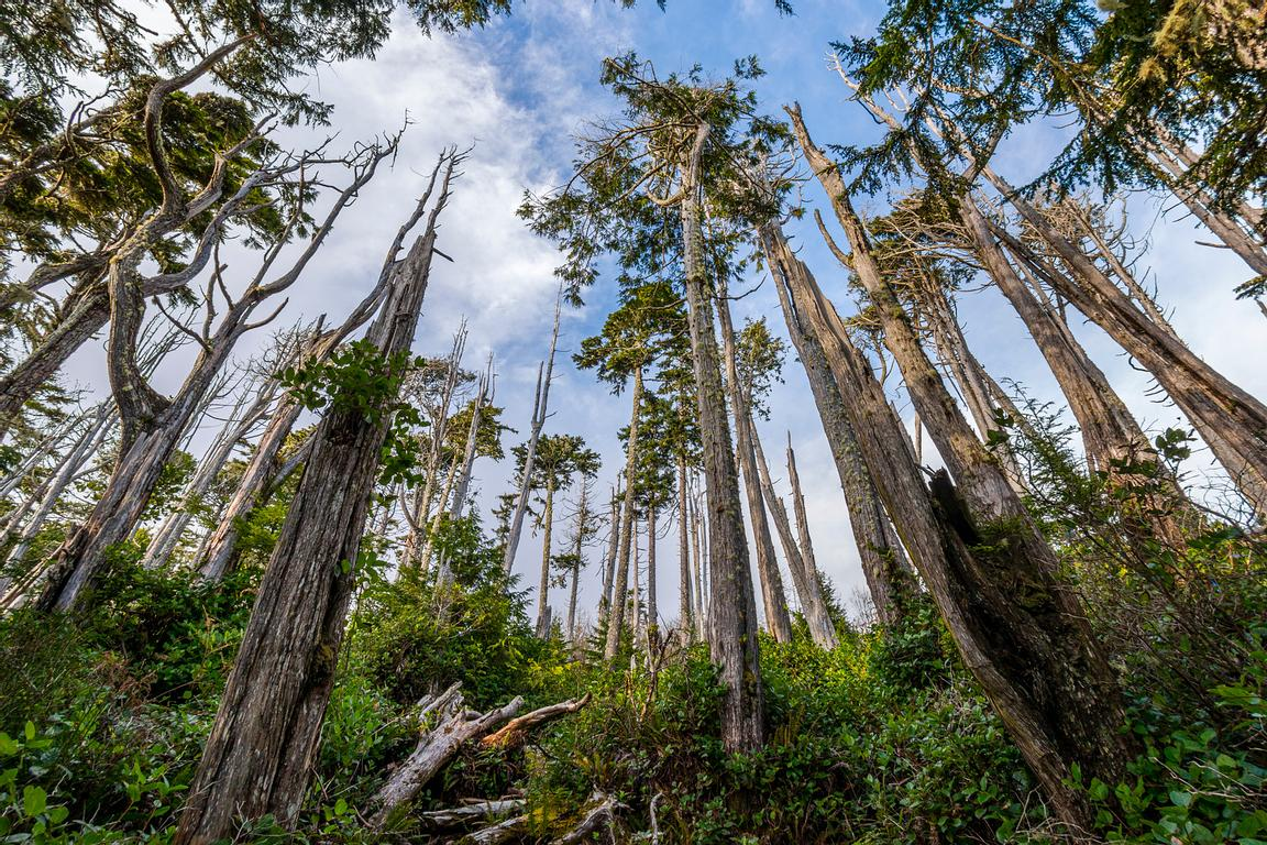 Gnarly trees along the Wild Pacific Trail in Uclulet.