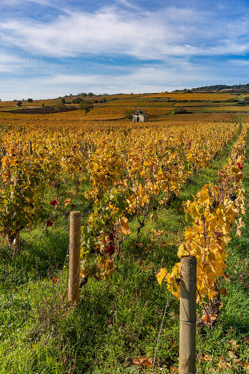 Old stone farmhouse in the middle of a vineyard in Burgundy, France