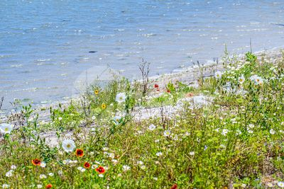 Assorted type of beautiful wildflowers in Aransas NWR, Texas