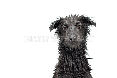 Wet black dog studio