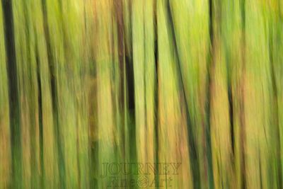 sctrforestabstract-4