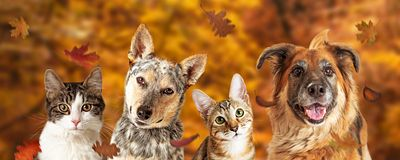Autumn Dog and Cat Scene Web Banner