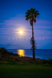 Maui Hawaii Palm Tree Moon Photo