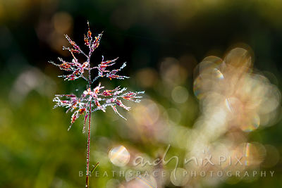 Wall Art Decor Photo Print: Jewel Grass II