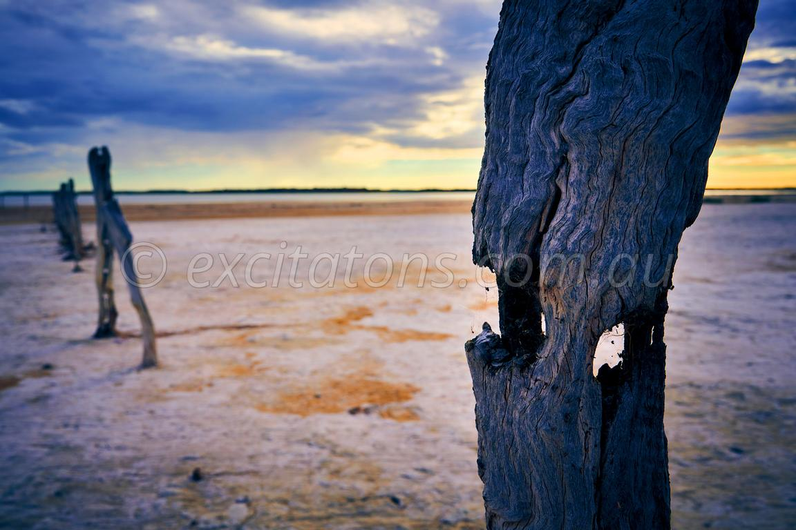 Posts, Coorong, South Australia.