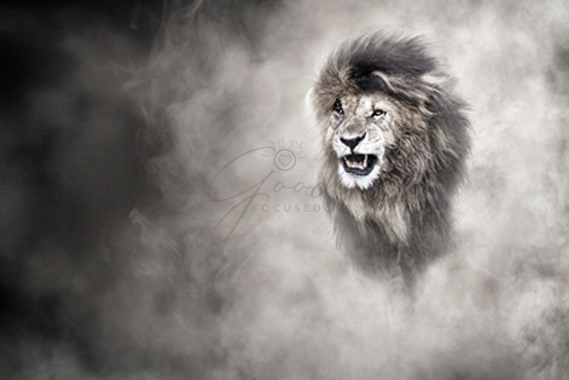 African_Lion_In_The_Dust_1