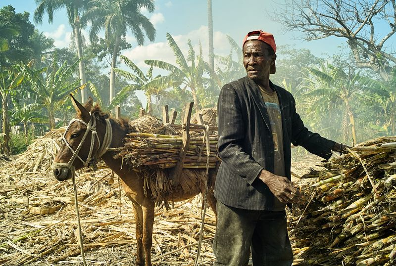 Sugarcane farmer in Pignon, Haiti