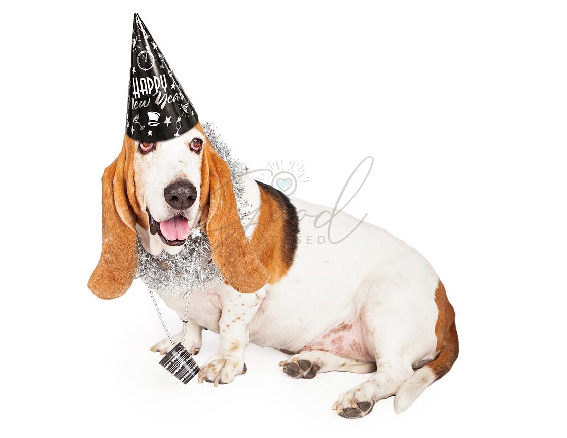 New Years Basset Hound Dog