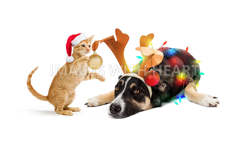 Kitten Decorating Dog For Christmas
