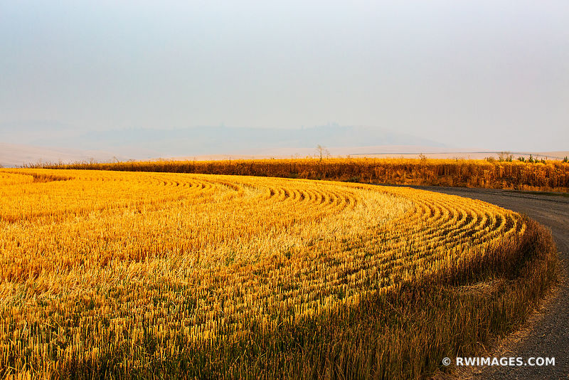 WHEAT FIELD AFTER SUMMER HARVEST COUNTRY ROAD PALOUSE REGION EASTERN WASHINGTON STATE LANDSCAPE