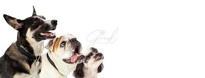 Three Excited Dogs on White Web Banner