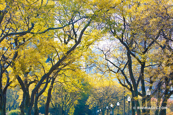 TREES IN FALL MILTON LEE OLIVE PARK CHICAGO ILLINOIS