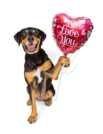 Dog Carrying I Love You Balloon