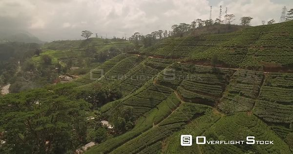 Kenilworth Tea Plantation Sri Lanka