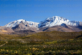 View of Nevados de Putre / Taapaca volcano, Lauca National Park, Region XV, Chile