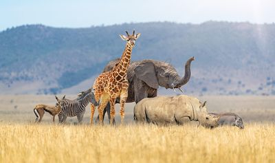 Baby Safari Animals Together in African Grasslands