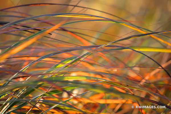 AUTUMN WIND IN THE PRAIRIE TALLGRASS PRAIRIE NATURE ABSTRACT
