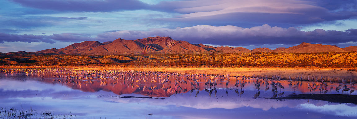 Bosque del Apache and Sandhill Cranes