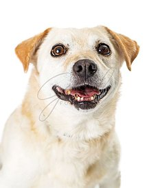 Eager white mixed breed dog wide eyes