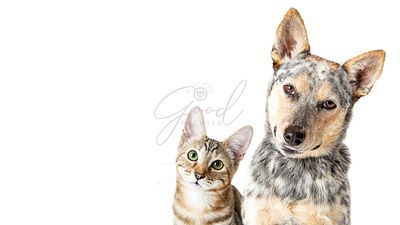 Cute Cat and Dog Together Tilting Heads Web Banner