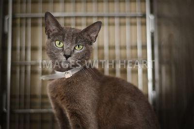 Grey cat in kennel