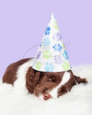 Sleeping Birthday Party Puppy