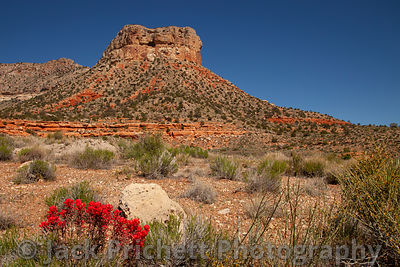 Desert butte with Indian Paintbrush plant