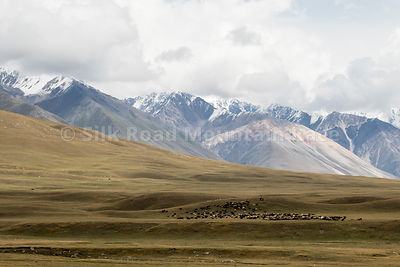 SILKROAD_2019_DAY_8_80