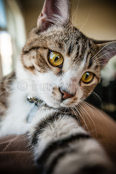 DH_Cats-0116