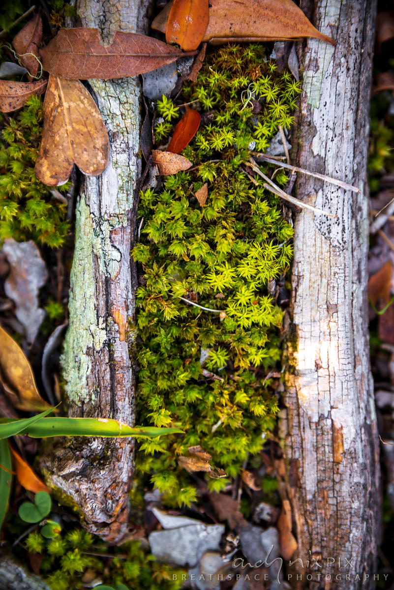 A miniture garden of moss on the forest floor