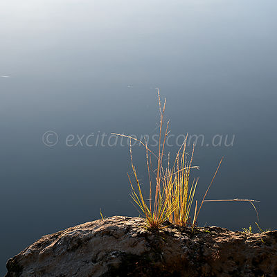 grass growing on riverbank, Murray River, Australia.
