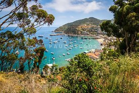 Avalon Bay Catalina Island Photo