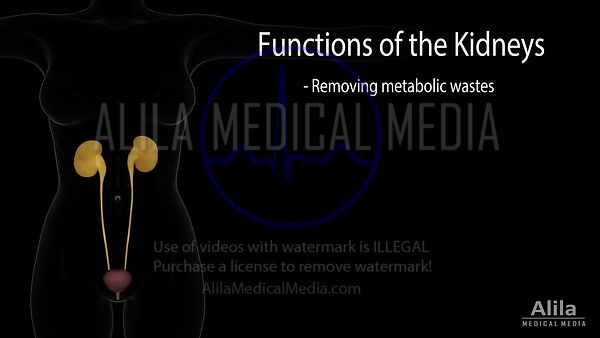Basic functions of the kidneys NARRATED animation