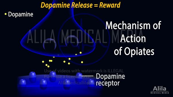Mechanism of action of opiates (opioids), animation