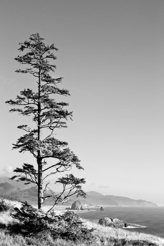ECOLA STATE PARK AND CANNON BEACH OREGON COAST BLACK AND WHITE VERTICAL