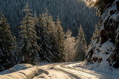 Winter drive through the forest on Vancouver Island.