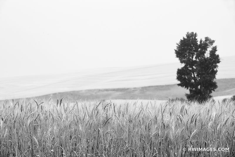 WHEAT FIELD FARM PALOUSE EASTERN WASHINGTON STATE BLACK AND WHITE