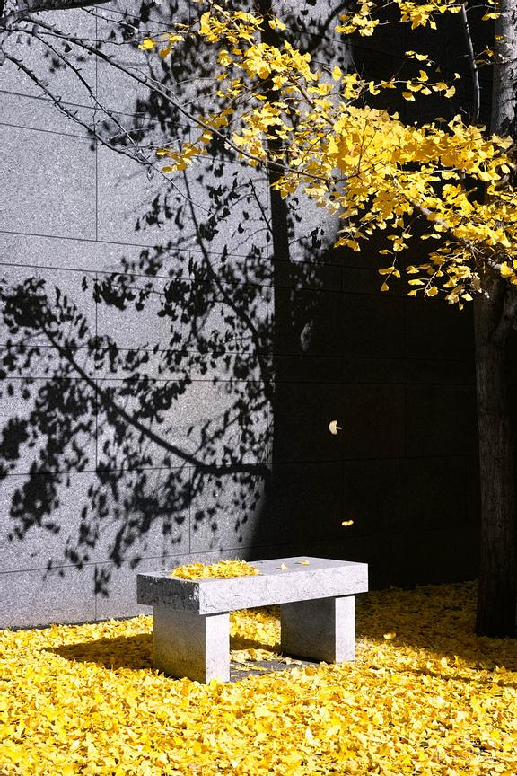 Pittsburgh_Bench_Ginsing_Leaves