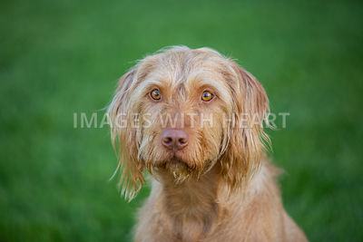 Close_Up_Of_Dog_Sitting_In_Green_Grass