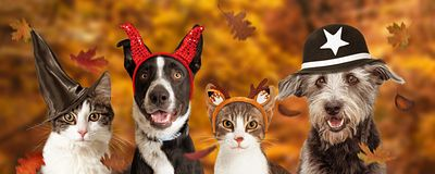 Halloween Dogs and Cats Autumn Web Banner