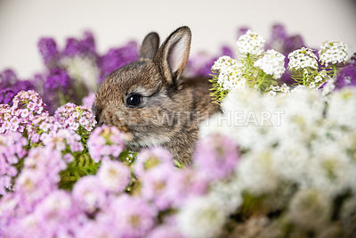 Baby Rabbit in Purple Flowers