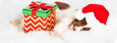 Springer Spaniel Puppy Wearing Santa Hat While Sleeping By Gifts