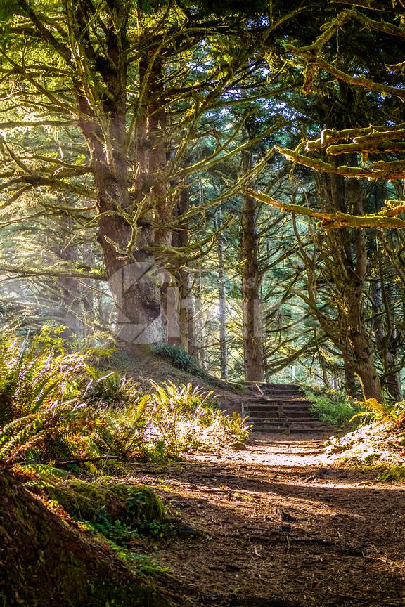 A forest trail with the sun shining through the foliage in Heceta Head Lighthouse State Park Florence, Oregon