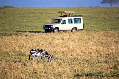 African Safari Tourists Photographing Zebra