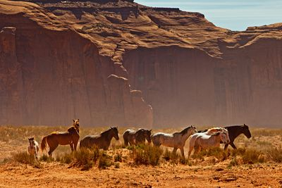 Wild Horses in the Desert