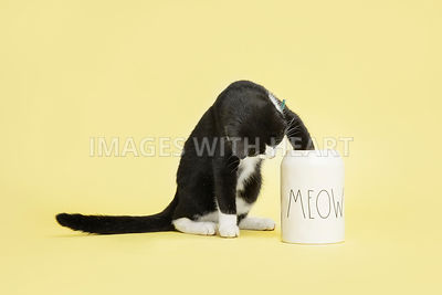 Black_&_white_cat_sitting_with_paw_in_treat_jar_on_yellow_background