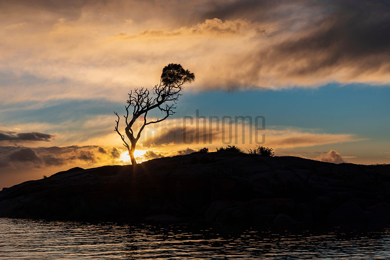 Silhouette of Binalong Bay Tree at Sunrise