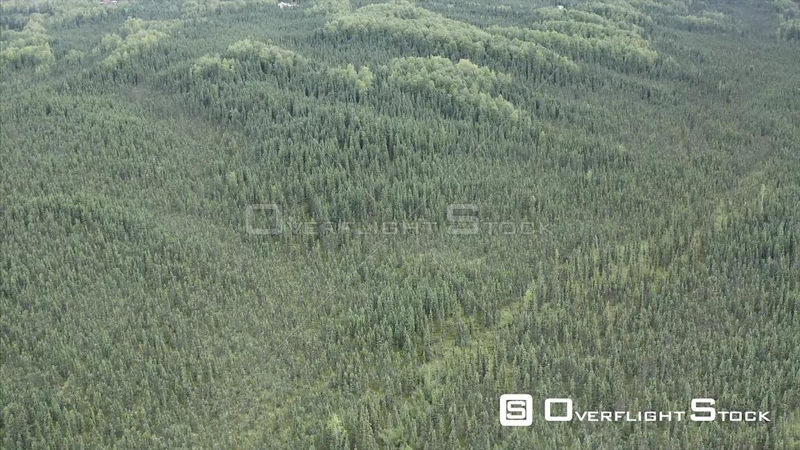 Drone Video Taiga Forest Alaska